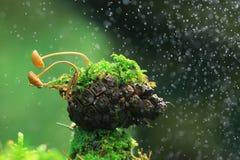 Petits champignons de couche Image libre de droits
