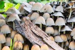 Petits champignons de différentes couleurs image libre de droits
