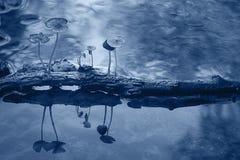 Petits champignons toxiques Photos libres de droits