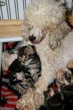 Petits chat et chien ensemble Photo stock