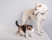 Petits chaton et chien mignons image libre de droits