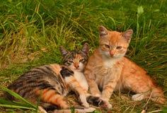 Petits chatons photographie stock libre de droits