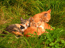 Petits chatons photographie stock