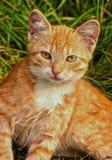 Petits chatons image stock