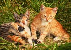 Petits chatons photo libre de droits
