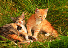 Petits chatons images stock