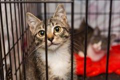 Petits chatons dans une cage d'un abri Photo stock