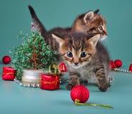 Petits chatons drôles avec l'arbre et les boules de Noël fait main Photos libres de droits