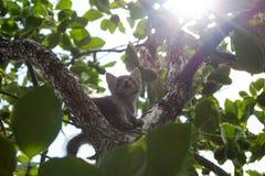 Petits chatons en été près des plantes vertes Photographie stock