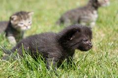 Petits chatons jouant sur la pelouse Photo stock