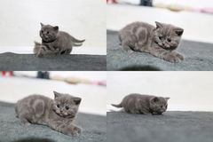 Petits chatons jouant sur le tapis, multicam, écran de la grille 2x2 Images libres de droits