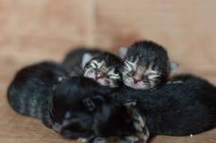 Petits chatons nouveau-nés aveugles dormant dans une boîte en carton Photos stock
