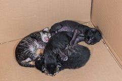 Petits chatons nouveau-nés aveugles dormant dans une boîte en carton Photo libre de droits