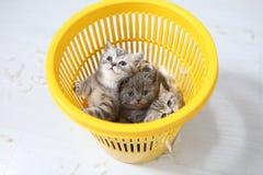 Petits chatons parmi les plumes blanches Photo libre de droits