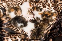 Petits chats Photo stock