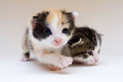Petits chats Photo stock