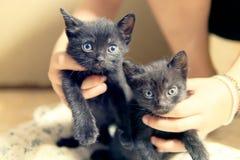 Petits chats de chatons avec des yeux bleus photos libres de droits
