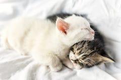 Petits chats de sommeil Images stock