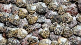 Petits coeurs de forme annulaire de peau de léopard de jaspe tourner autour clips vidéos