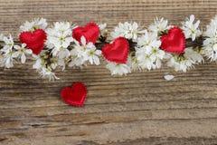 Petits coeurs rouges parmi des fleurs de cerisier Image stock