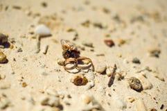 Petits crabe et bagues de fiançailles sur la plage Photo libre de droits