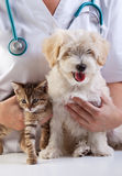 Petits crabot et chat au vétérinaire Photographie stock libre de droits