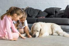 petits enfants alimentant le chien de golden retriever avec des festins photo libre de droits
