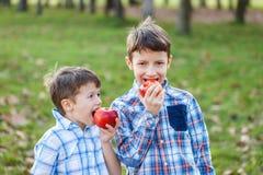 Petits enfants mangeant la pomme fraîche rouge Image stock