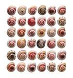 Petits escargots colorés photographie stock libre de droits
