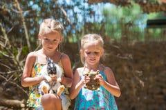 Petits fille adorable avec une tortue de terre et mignon Photos stock
