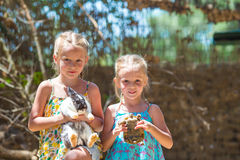Petits fille heureuse avec une tortue de terre et mignon Images libres de droits