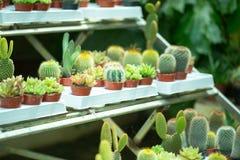 Petits fleurs et cactus dans des pots Photo stock