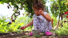 Petits fruits de fraise de cueillette de bébé dans le jardin de campagne banque de vidéos