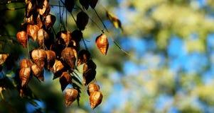 Petits groupes d'automne Photo libre de droits