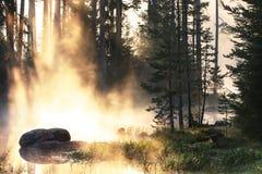 Petits groupes d'or de lac de lever de soleil Image stock