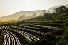 Petits hutte, gisements de riz et montagne au village de Bongpieng Photo libre de droits
