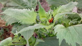 Petits insectes sur l'herbe Images libres de droits