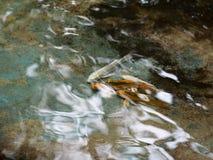 Petits jeunes poissons argentés blancs de la couleur KOI d'or jaune de longue queue Photo libre de droits