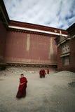 Petits lamas tibétains Image libre de droits