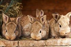 Petits lapins Photographie stock