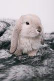 Petits lapins décoratifs mignons Image libre de droits