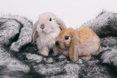 Petits lapins décoratifs mignons Photos stock