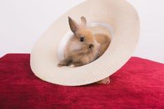 Petits lapins décoratifs mignons Images libres de droits
