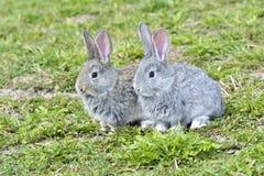 Petits lapins se reposant dehors Image stock