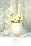 Petits marguerites blanches et seashells Photographie stock libre de droits