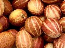 Petits melons vietnamiens rayés photos libres de droits