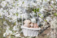 Petits oeufs de pâques beiges dans un panier accrochant sur les branches d'un cerisier de floraison Images stock