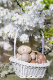 Petits oeufs de pâques beiges dans un panier accrochant sur les branches d'un cerisier de floraison Photos libres de droits