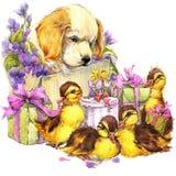 Petits oiseau, animaux familiers chiot, cadeau et fond de fleurs Photographie stock libre de droits