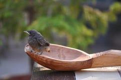 Petits oiseau et cuillère Photos stock